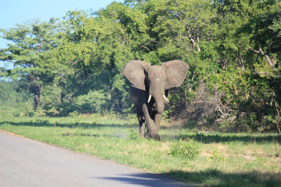 elephant-voyage
