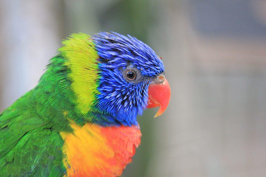 voyage-perroquet